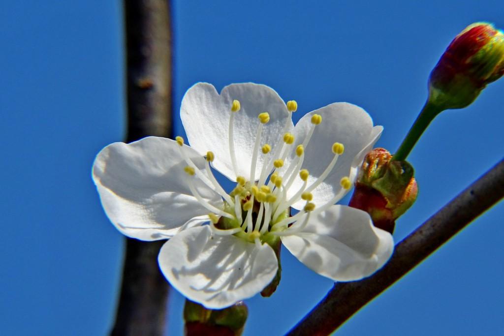 Майские цветы 03