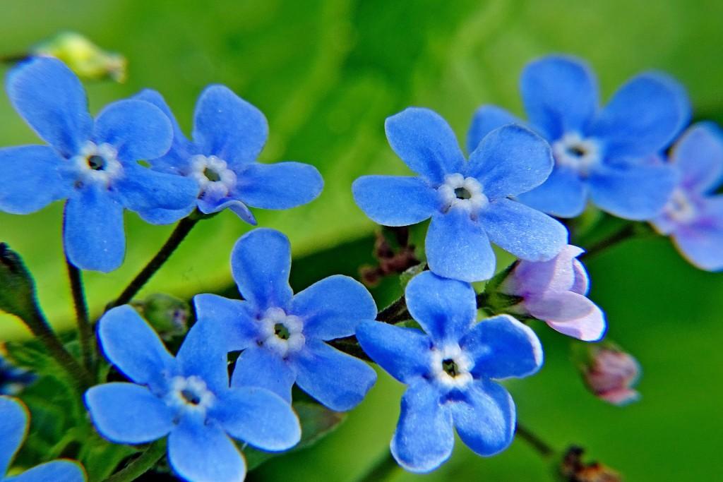 Майские цветы 04
