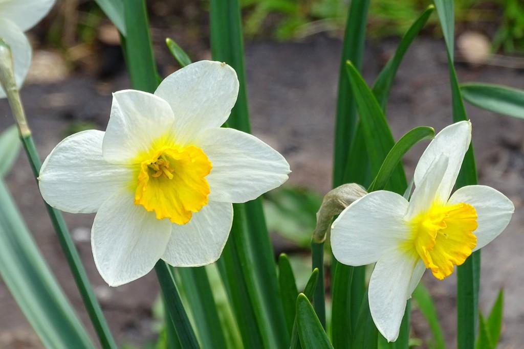 Майские цветы 06