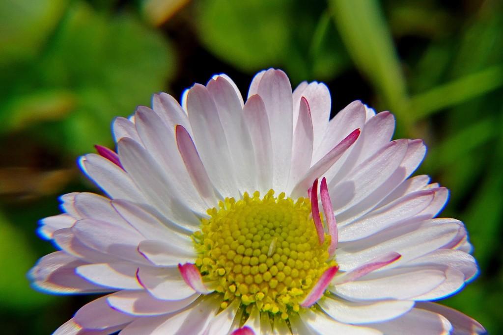 Майские цветы 09