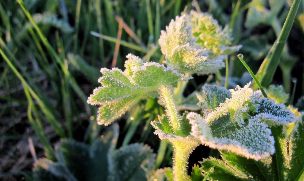 Морозное майское утро в Вязниках 02