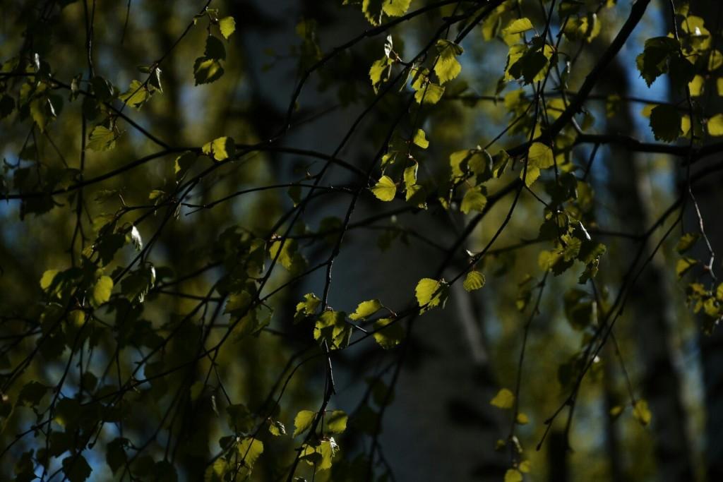 Прошли дни бесцветной весны, настало время сочной зелёной листвы! 02