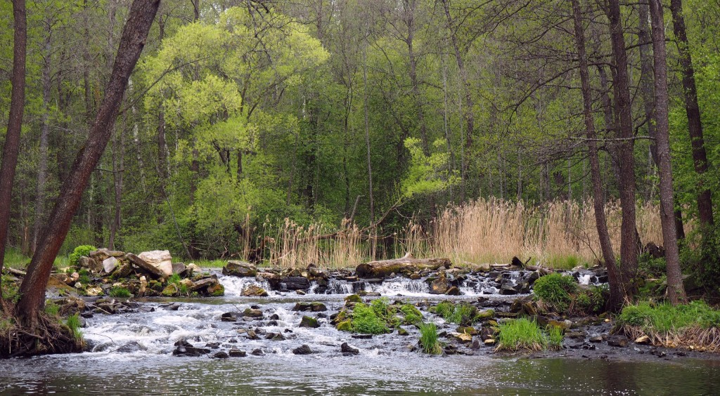 Рекреация зоны вдоль реки Нерехты 06