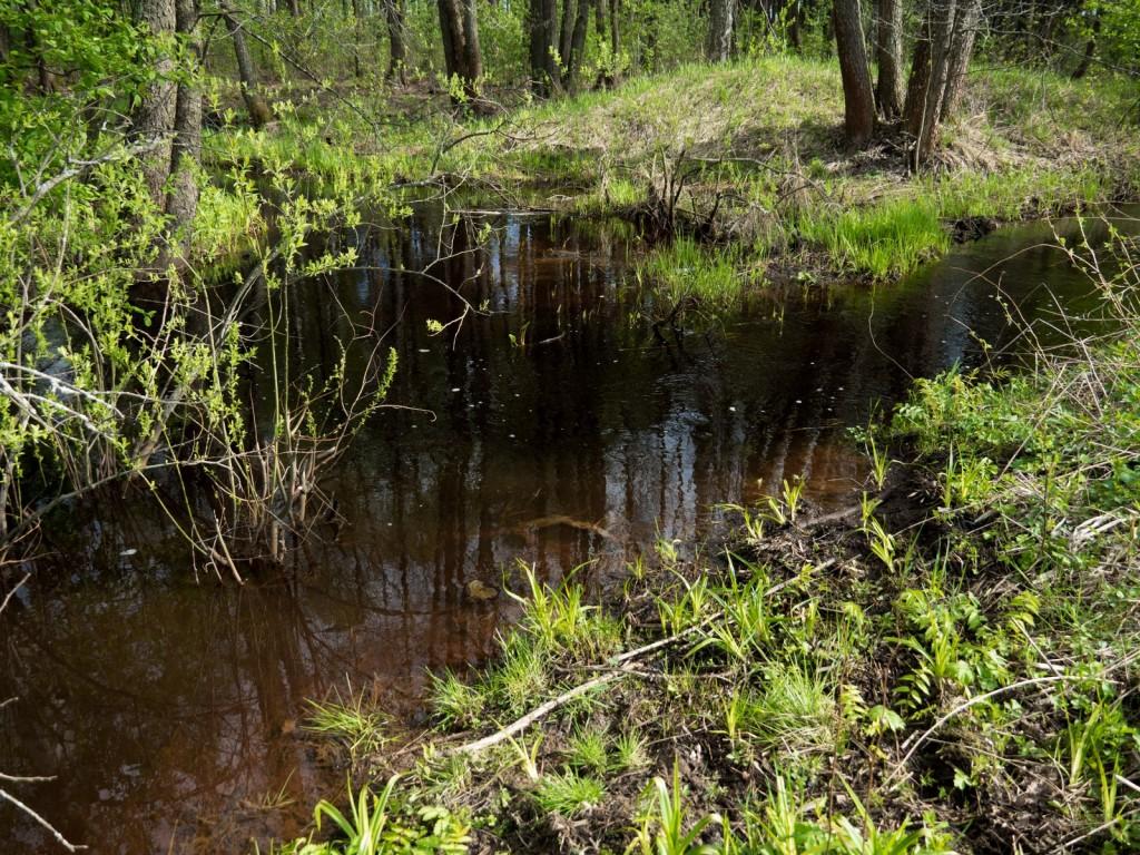 Слияние чёрных вод Шитки и красных вод безымянного ручья 01
