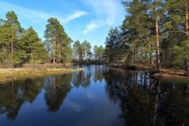 река Бужа, окрестности деревни Тихоново, Гусь-Хрустальный р-н