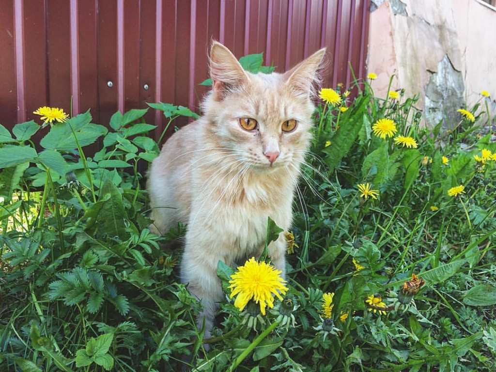Владимирский кот. К фотосессии готов!