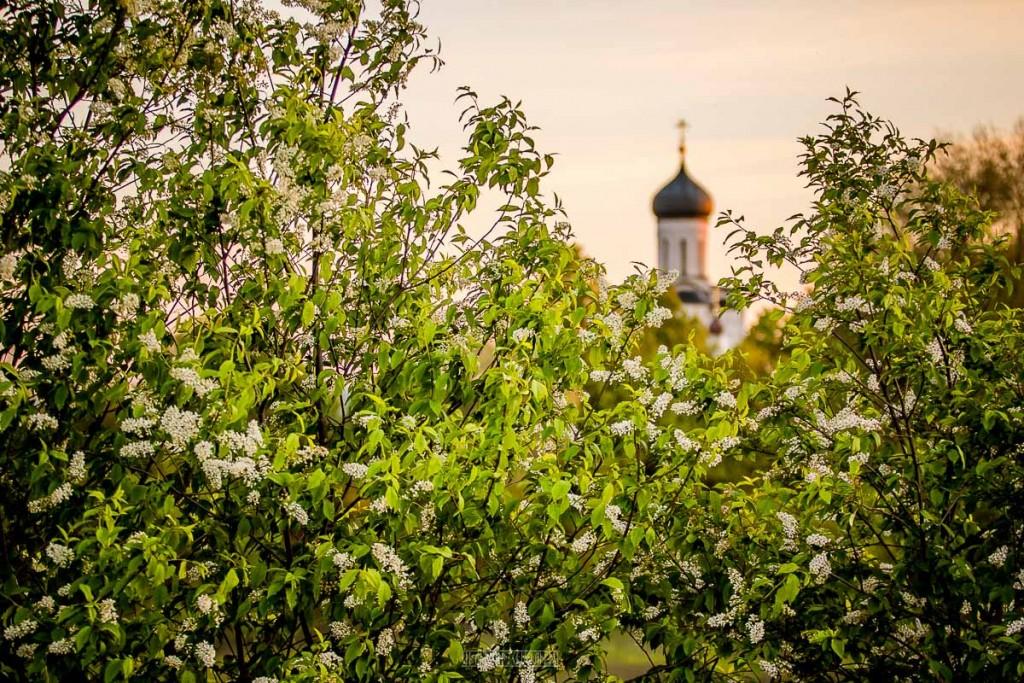Красоты России - Церковь Покрова На Нерли