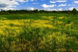 Цветущее поле. Собинский район