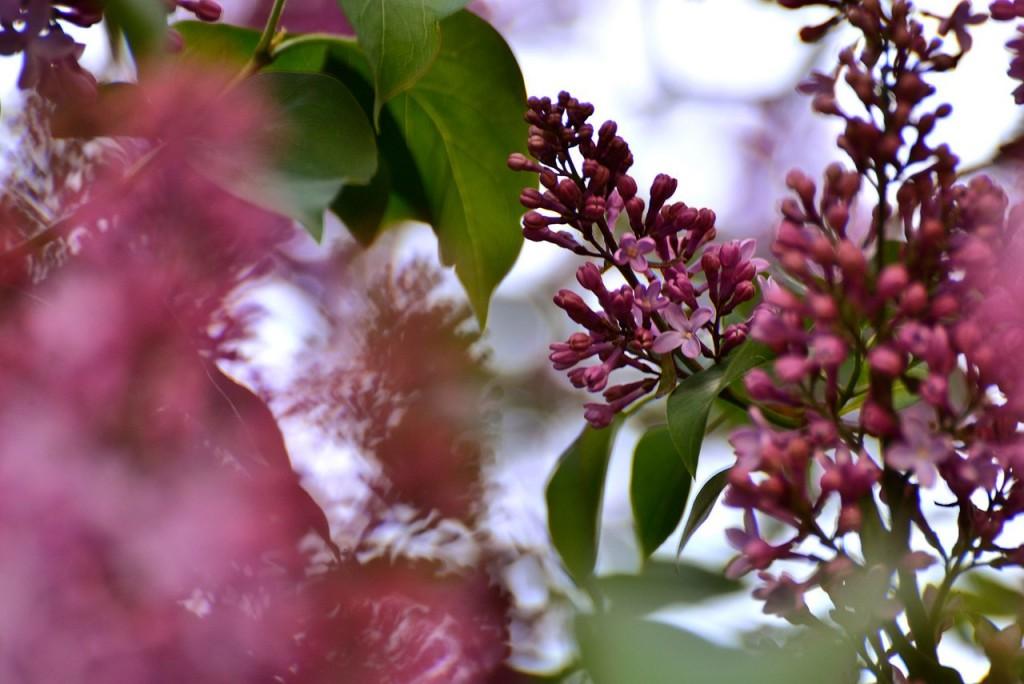 Владимир весна-лето 05