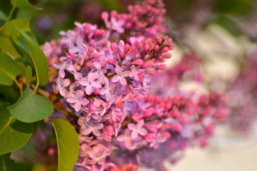 Владимир весна-лето 06
