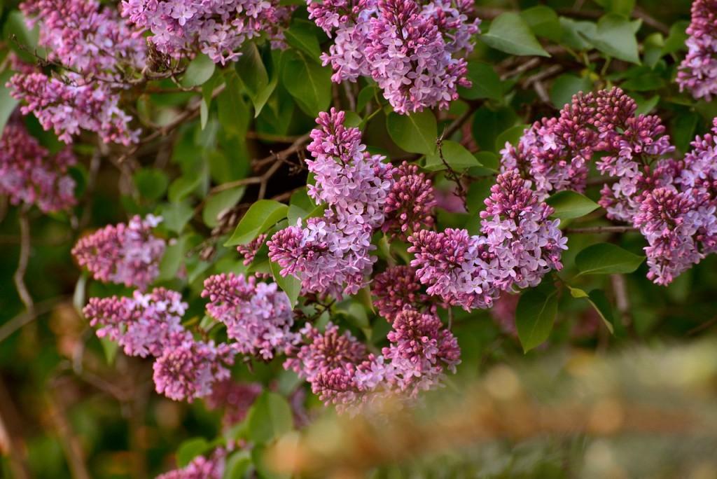Владимир весна-лето 07