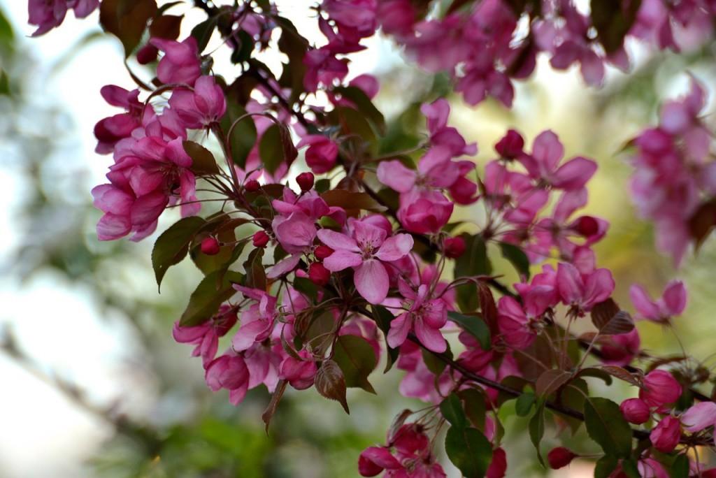 Владимир весна-лето 10