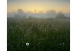 Вязниковский р-он, д.Золотая грива (Красота Вязниковской природы)