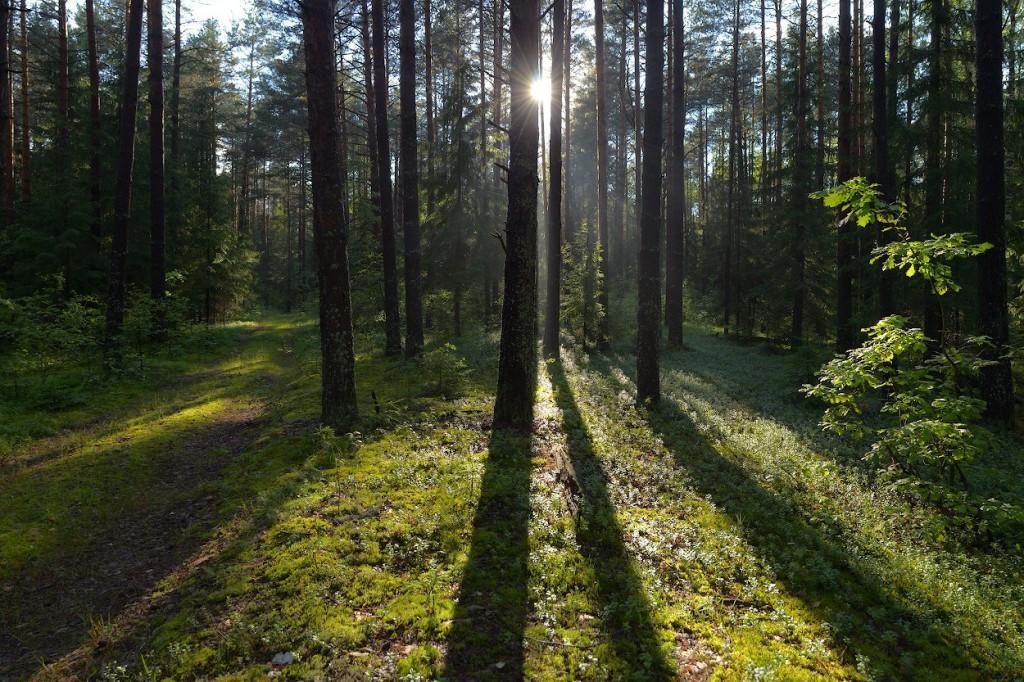 Головинские леса после дождливого дня, Судогодский р-н