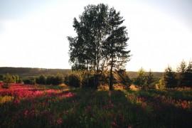 Ковровское многоцветье