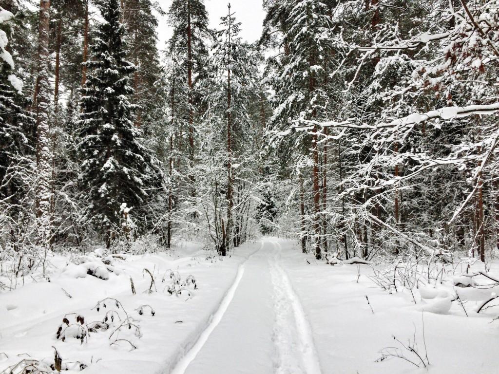 Красивый зимний лес в Гусь-Хрустальном 02