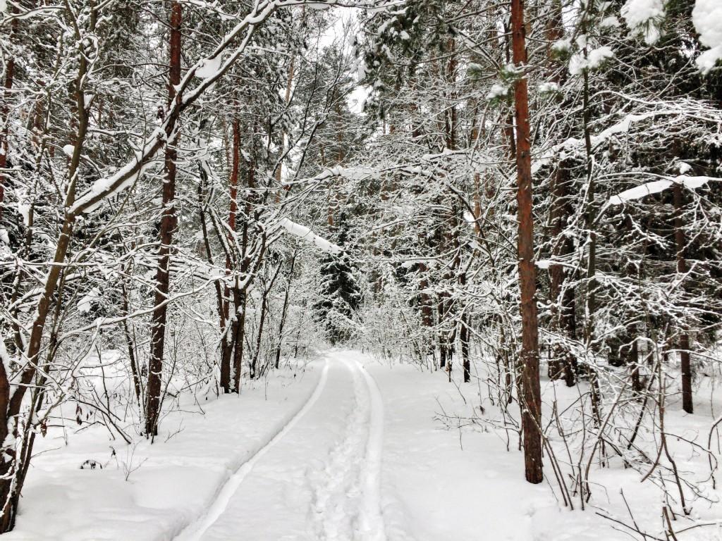 Красивый зимний лес в Гусь-Хрустальном 03