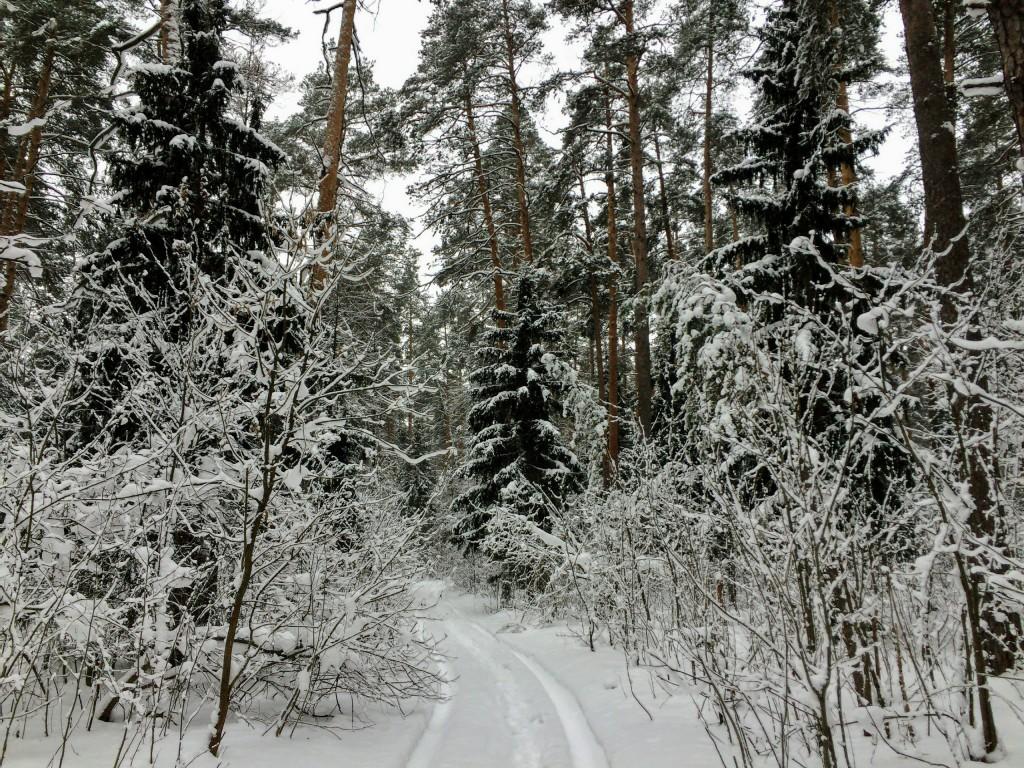 Красивый зимний лес в Гусь-Хрустальном 04
