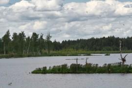 Лаптевское болото, Камешковский р-н