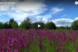 Летняя природа во Владимирском крае
