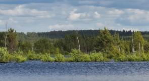 Урсово болото, Камешковский р-н