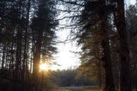 Лес близ деревни Лаврово, Судогодский р-н