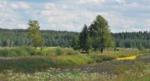 Окрестности деревни Карякино, Камешковский р-н