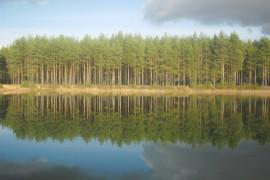Отражение в озере. Судогодский район.