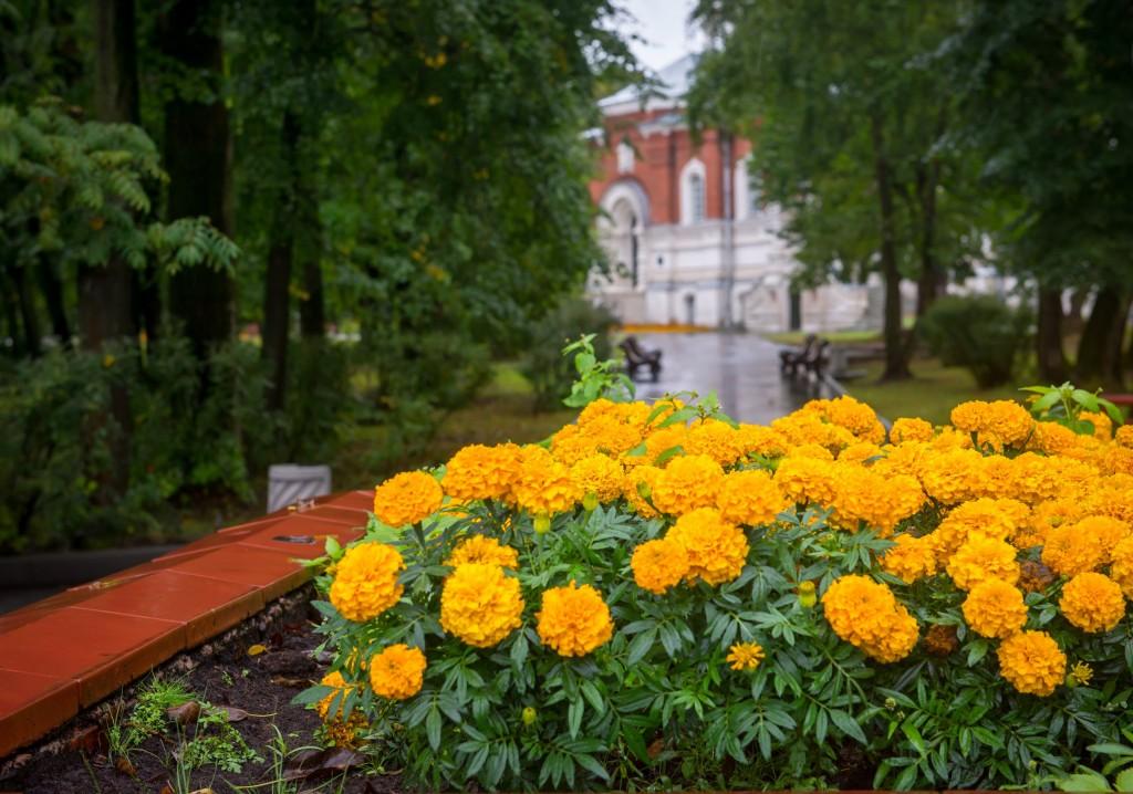 Осень в Гусь-Хрустальном 03