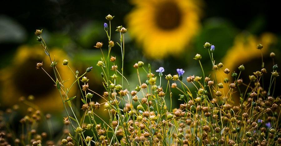 Патриаршие сады в августе 2017 18