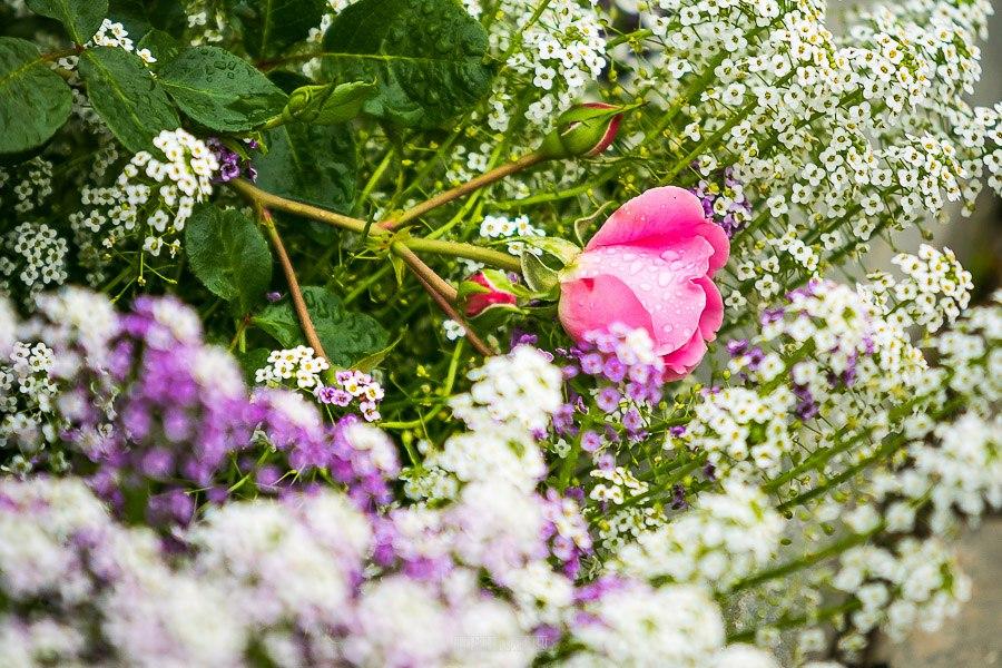 Патриаршие сады в августе 2017 33