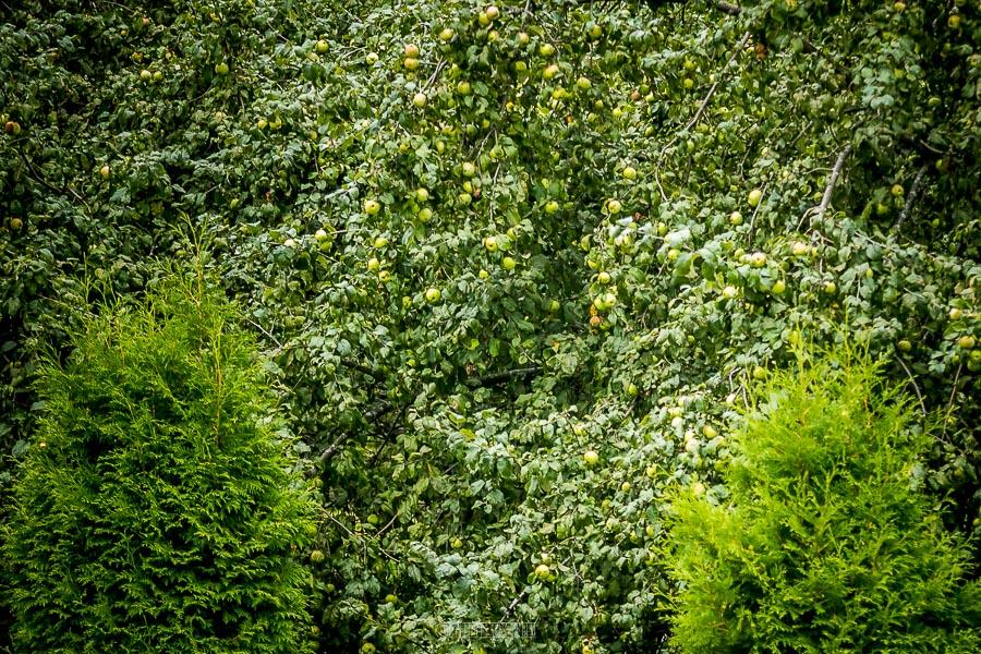 Патриаршие сады в августе 2017 35
