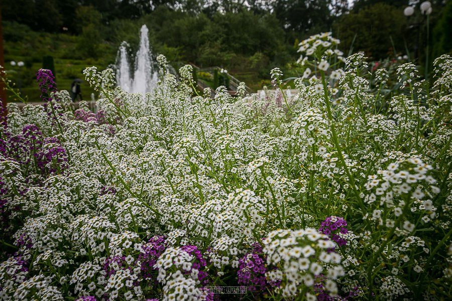 Патриаршие сады в августе 2017 40