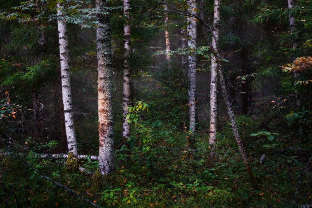Так преображается природа... Вязниковский район 03