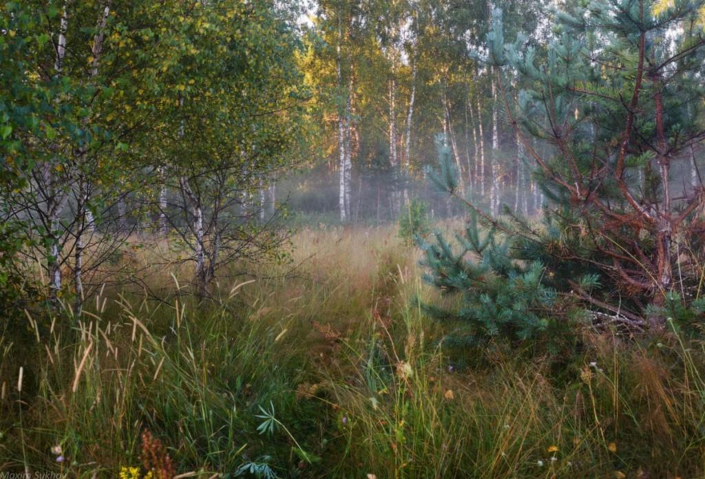 Так преображается природа... Вязниковский район 04