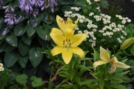 Цветы, выращенные заботливыми руками владимирцев, ещё радуют нас