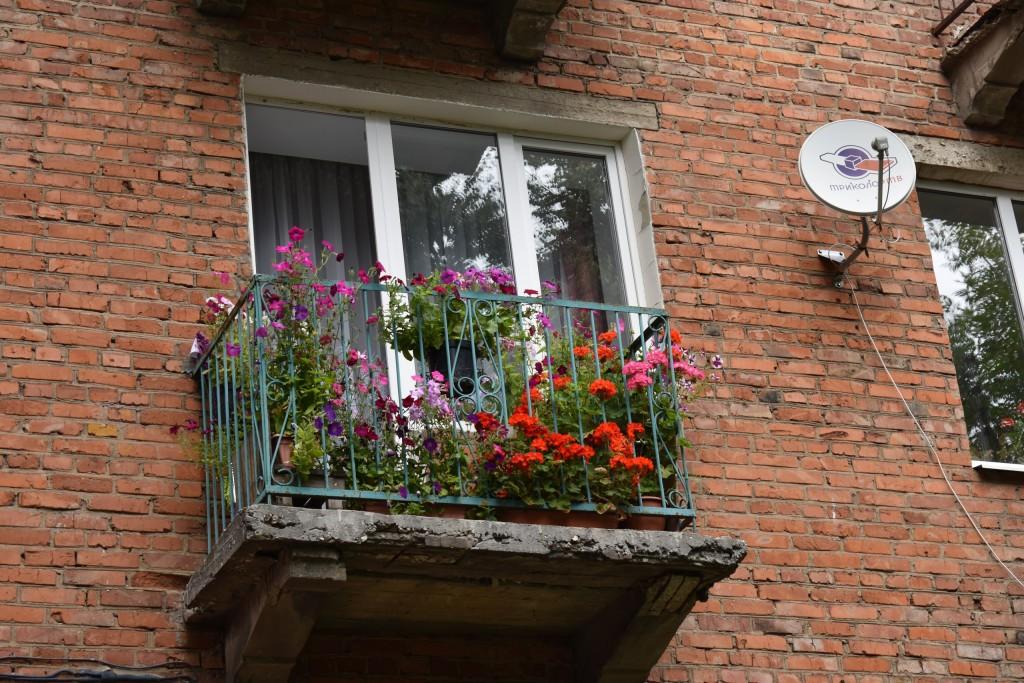 Цветы, выращенные заботливыми руками владимирцев, ещё радуют нас 10