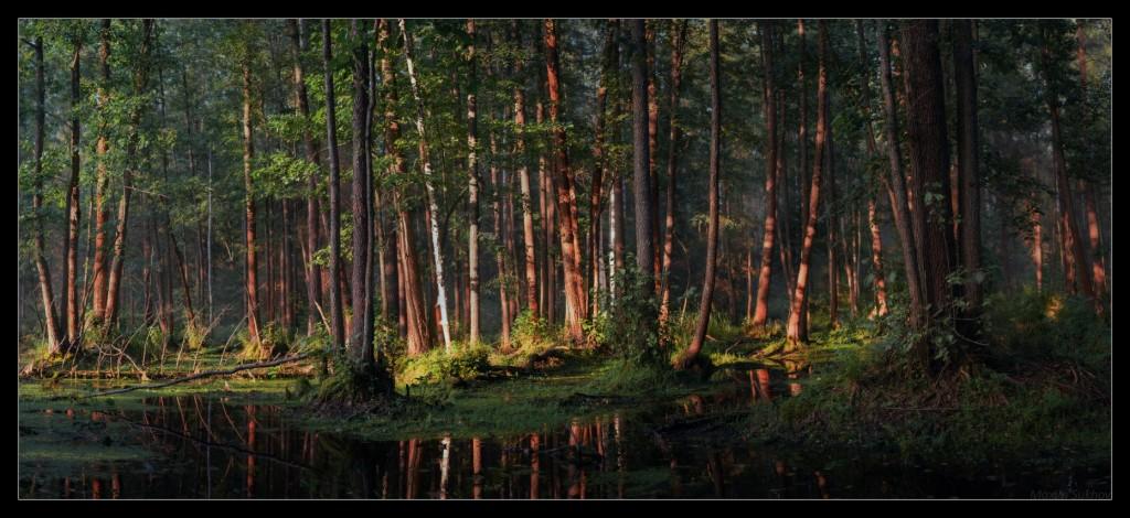 Волшебное болото недалеко от Никологор. Владимирская обл, Вязниковский р-он