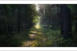 Живописная дорога в Вязниковском лесу