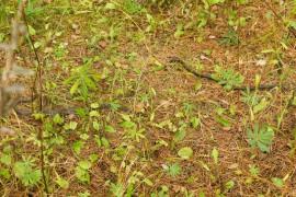 Змеи в Меленковском районе