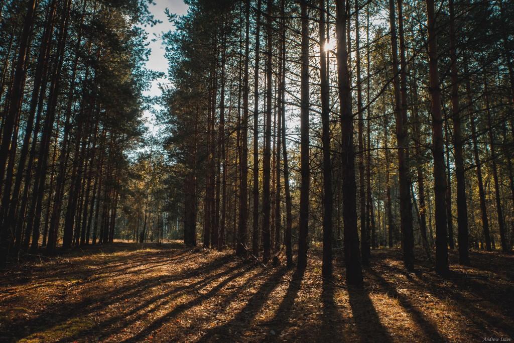 Лес у деревни Загряжское