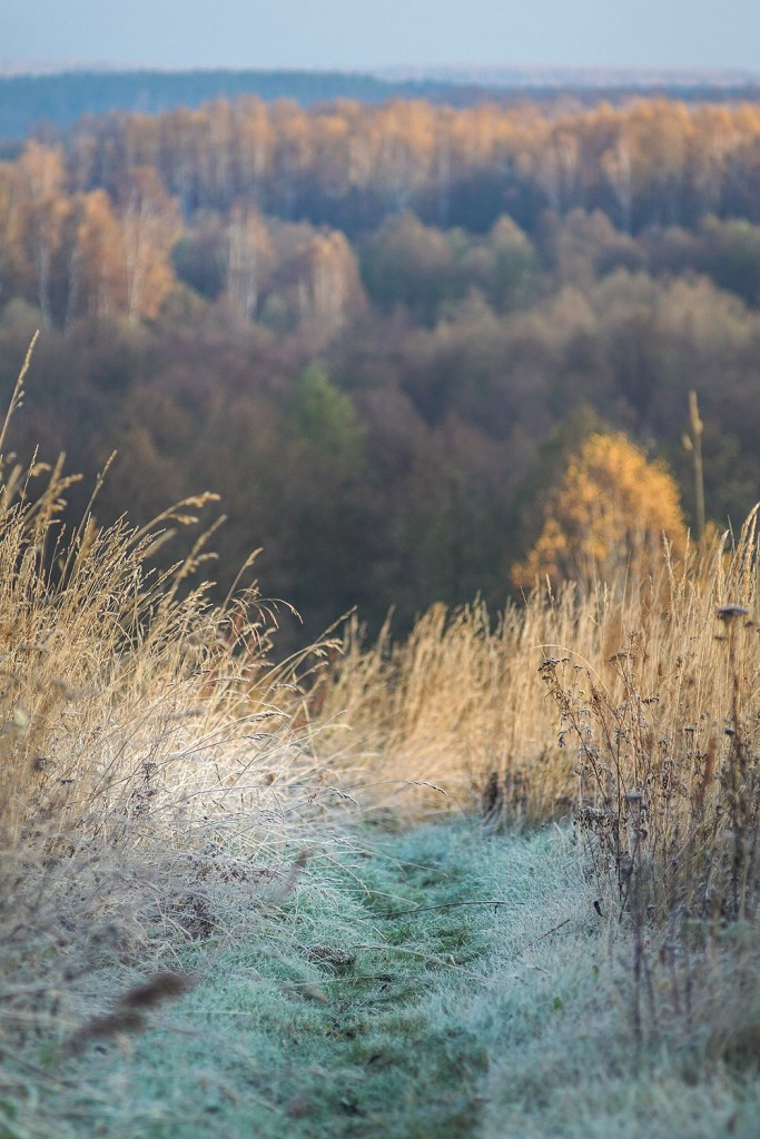 Морозное утро во владимирской деревне 03