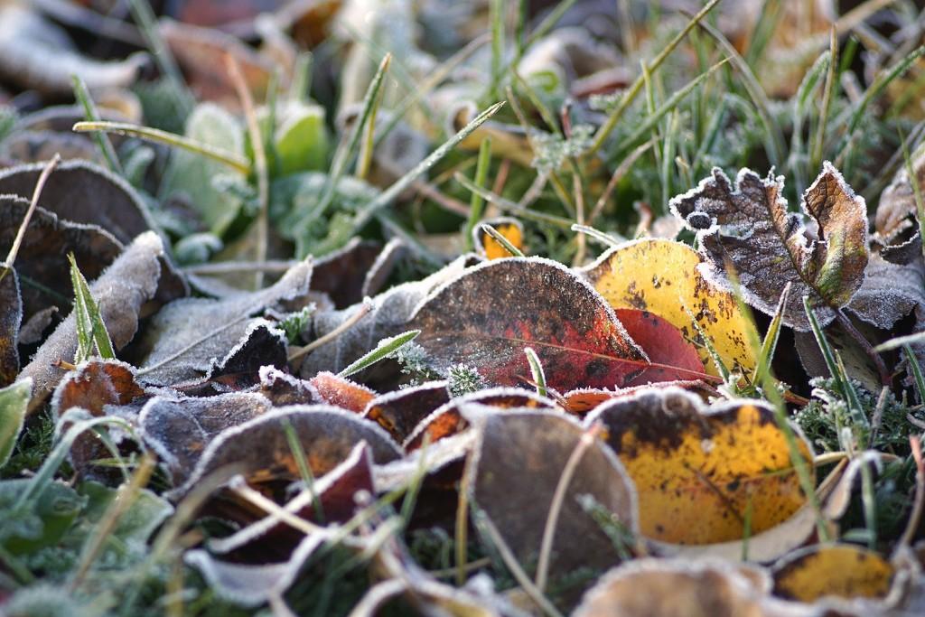 Морозное утро во владимирской деревне 05