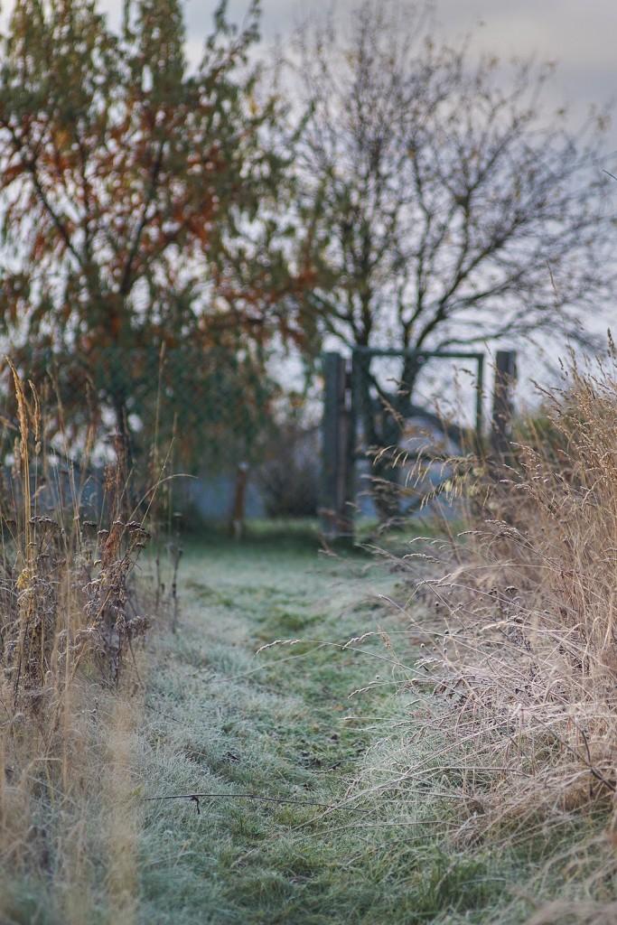Морозное утро во владимирской деревне 06