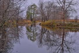 Накануне зимы в Загородном парке ( Владимир, конец октября)