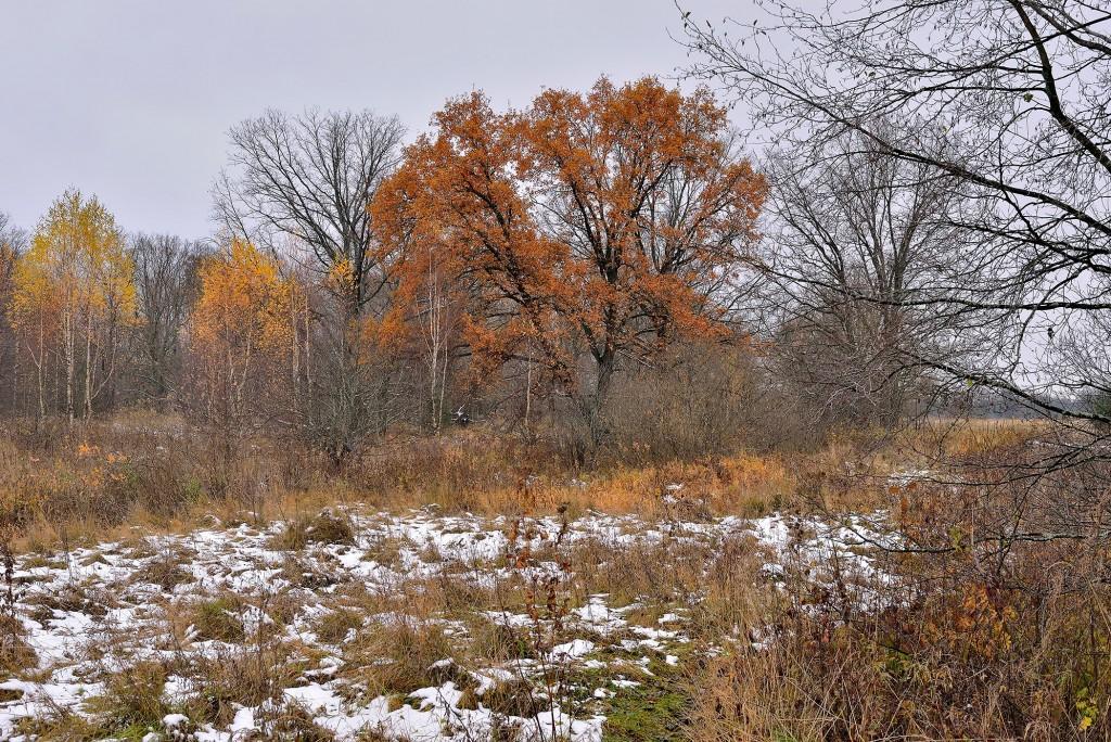 Накануне зимы в Загородном парке ( Владимир, конец октября) 02