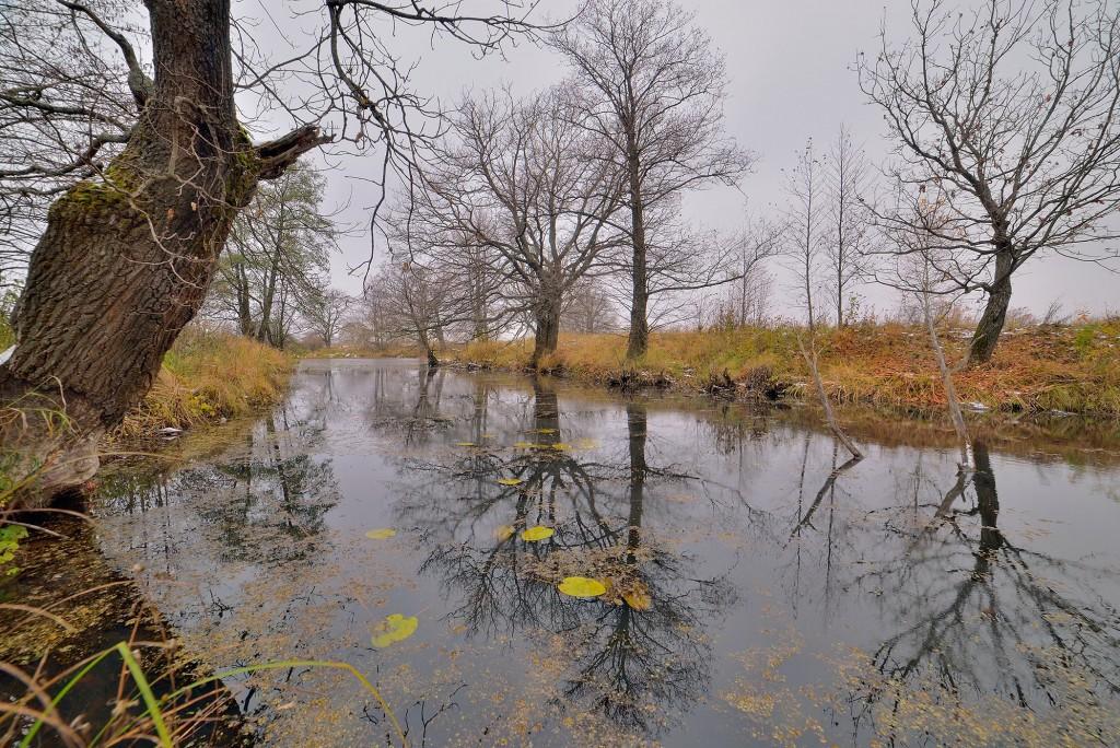 Накануне зимы в Загородном парке ( Владимир, конец октября) 04