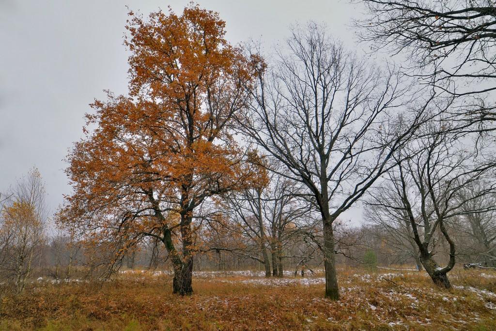 Накануне зимы в Загородном парке ( Владимир, конец октября) 05