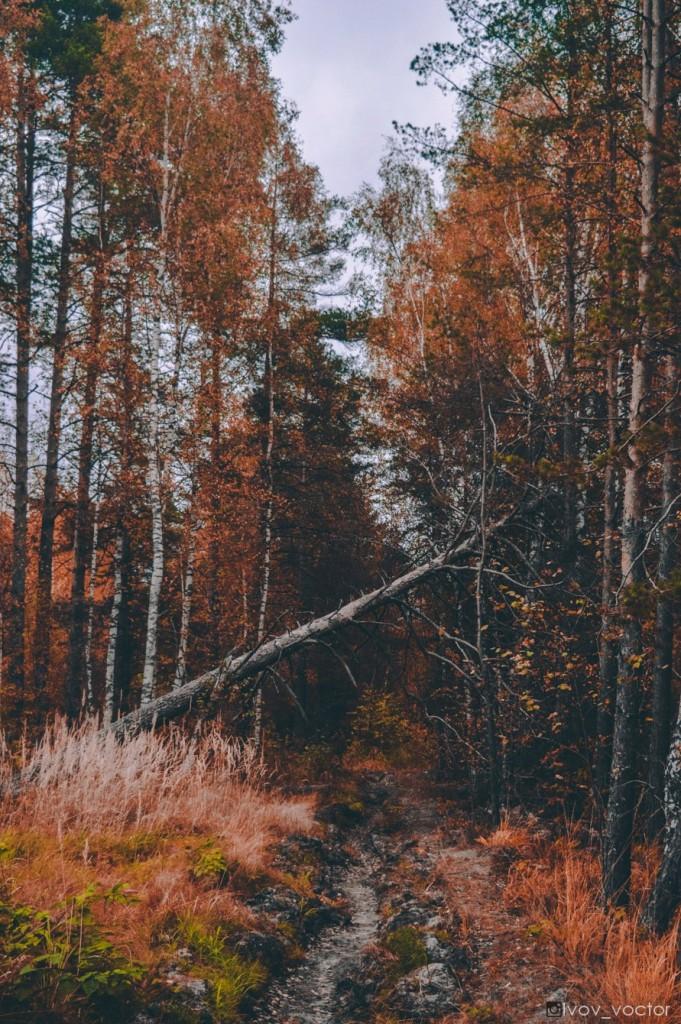 Осенние просторы Владимирской области 06