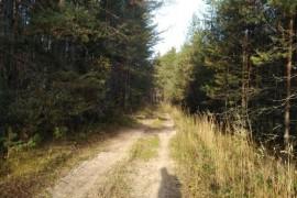 Осенний лес преподносит свое настроение и его дары для нас